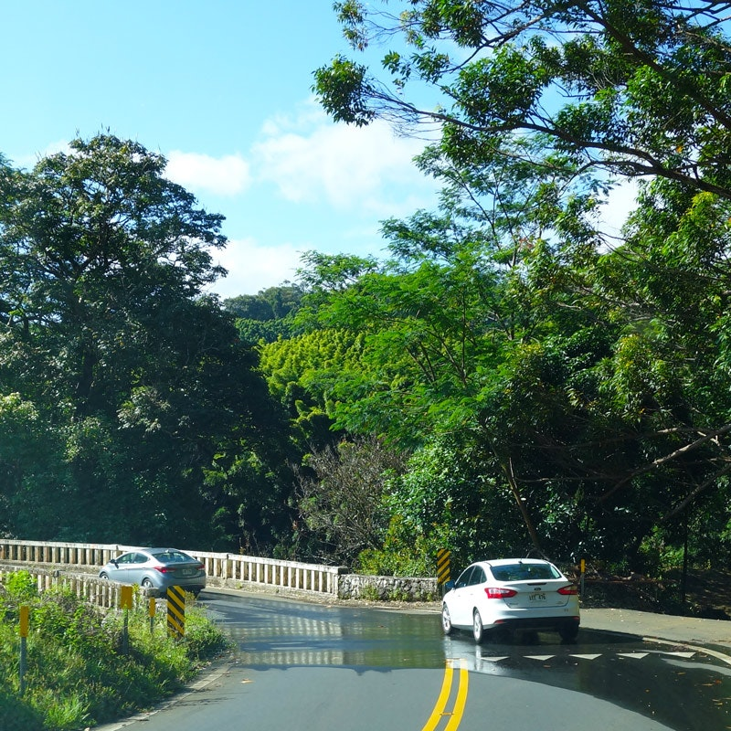 Insured drivers on the Hana Highway